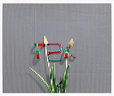 Lot 6-Annette Kelm (German b.1975), 'Untitled (TZK)', 2013
