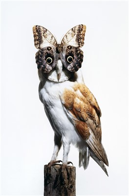 Lot 56 - Nancy Foutts ( American)Owl with Butterfly, 2012